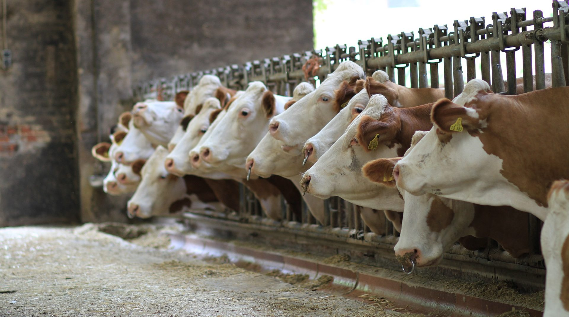 Vita-Špindler d.o.o., Prodaja in odkup živine
